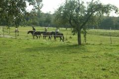 11_Herbstwanderritt_2011